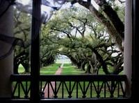 View from the Top - Oak Alley Plantation, Vacherie, LA